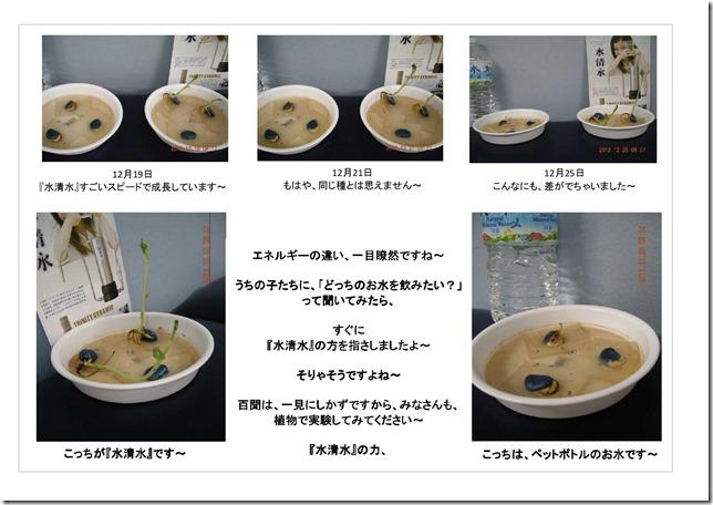 水清水の力!そら豆実験2